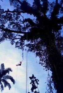 Climbing the great kapok tree