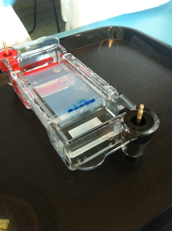 the fully loaded DNA agarose gel ready to be hooked up to a power supply for electrophoresis