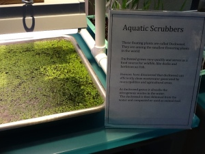 Aquatic Scrubbers