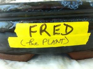 plant name tag