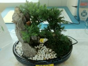 bonsai pot connected to a Labquest by a soil moisture sensor