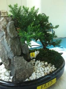 decorative bonsai in flat pot connected to a soil moisture sensor