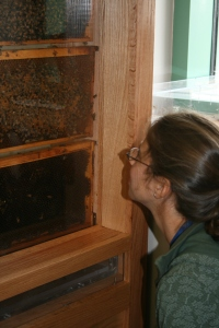 Educator Martha Fisk inspects the hive