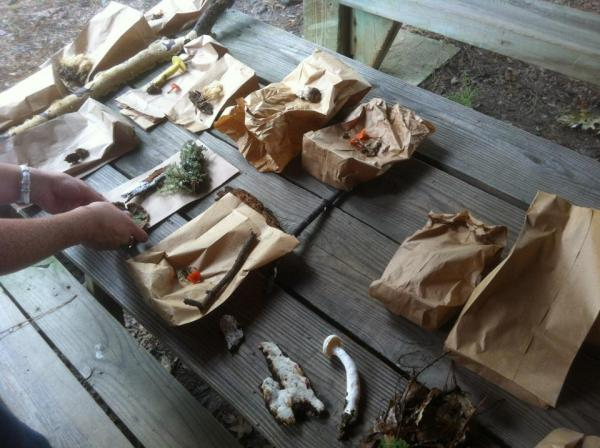 The mushrooms we collected at Scheck Forest, Raleigh, NC