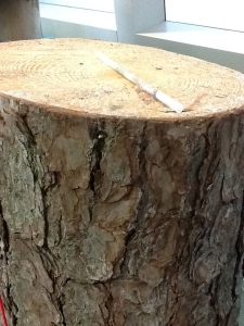 Tree Log with Core