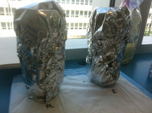 Winogradsky columns wrapped in foil
