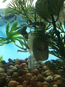 image of a crayfish molt