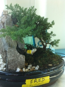 Another shot of the bonsai before cutting