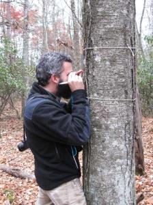 Lichen activity