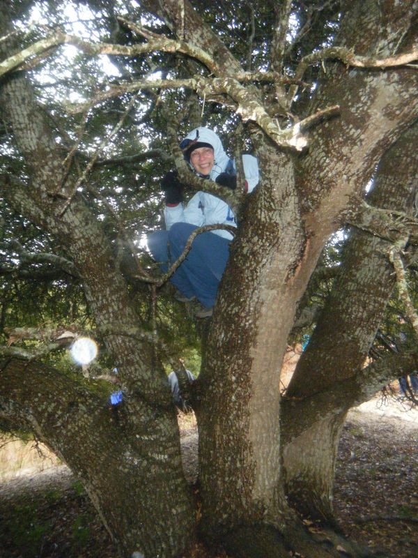 Jane in the live oak tree