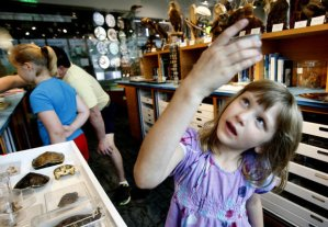 Naturalist Center visitor examining specimen