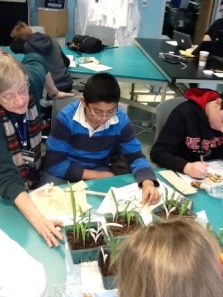 Volunteer and Student Counting Albino Corn Plants