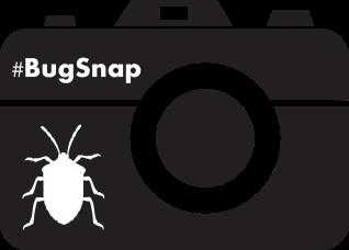 BugSnap