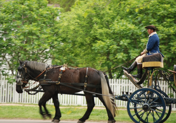 A man driving a horse-drawn carriage in Colonial Williamsburg. Colonial Williamsburg (2463527281)CC BY-SA 2.0  Harvey Barrison from Massapequa, NY, USA - Colonial Williamsburg Uploaded by AlbertHerring