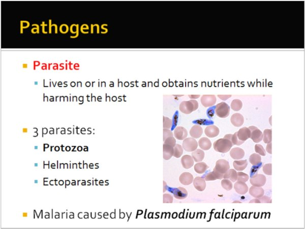 Power Point slide showing facts about one example of a famous pandemic — malaria.