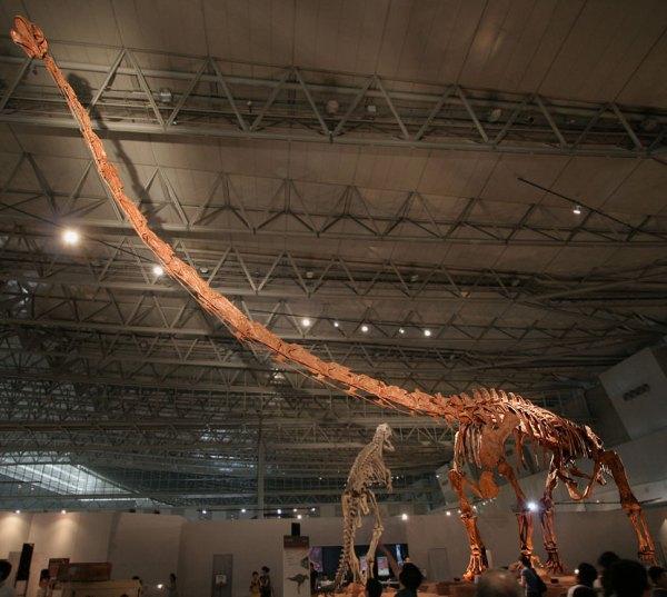 """Mamenchisaurus in Japan"" by Kabacchi - Mamenchisaurus - 03Uploaded by FunkMonk. Licensed under Creative Commons Attribution 2.0 via Wikimedia Commons - http://commons.wikimedia.org/wiki/File:Mamenchisaurus_in_Japan.jpg#mediaviewer/File:Mamenchisaurus_in_Japan.jpg"