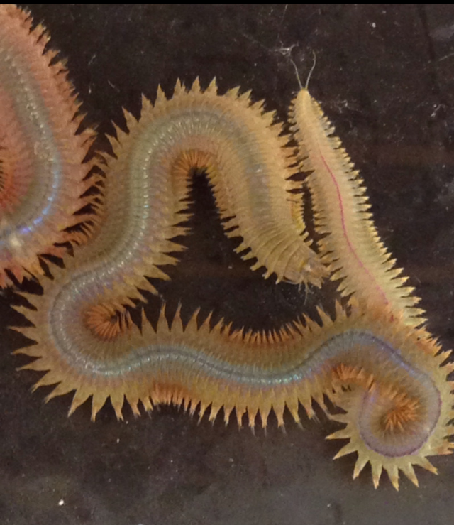 Wonderful World of Worms | NC Museum of Natural Sciences ...