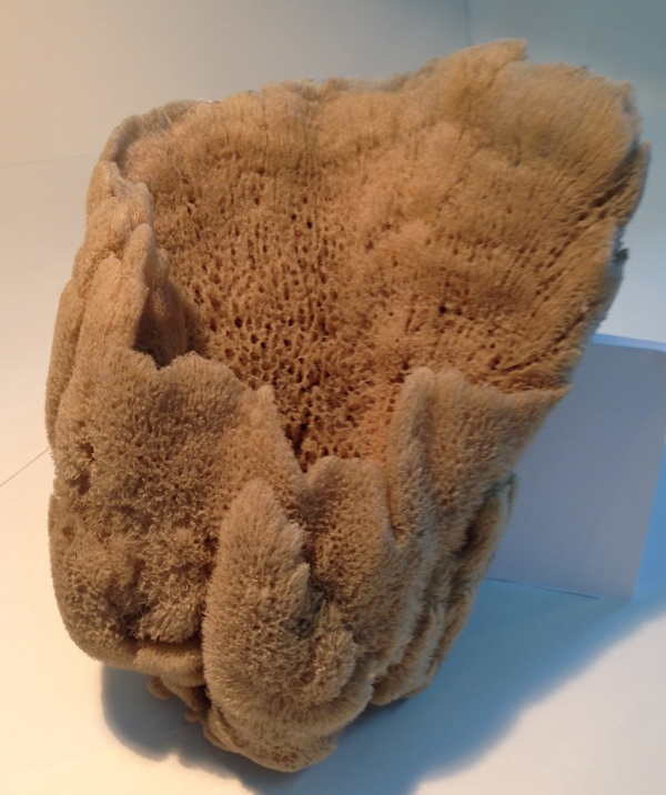 Sponge specimen