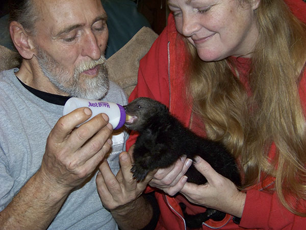 An infant Cole Bearcat Binturong being fed by Douglas Evans and Mindy Stinner. Photo by Kim Pyne, courtesy of Conservators Center.