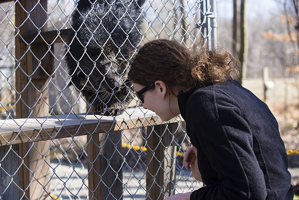 Cole Bearcat Binturong sniffing the head of Kasey Thornton. Photo by Ron Smith, courtesy of the Conservators Center.