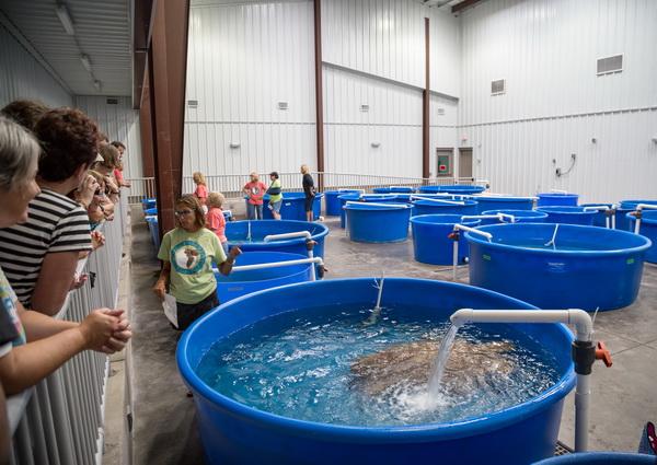 Sea Turtle Bay at the Karen Beasley Sea Turtle Rescue and Rehabilitation Center. Photo: Karen Swain/NCMNS.