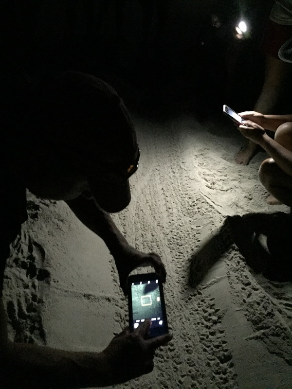 Several people from the group took photos of the hatchling tracks. Photo: Andy Kauffman/NCMNS.