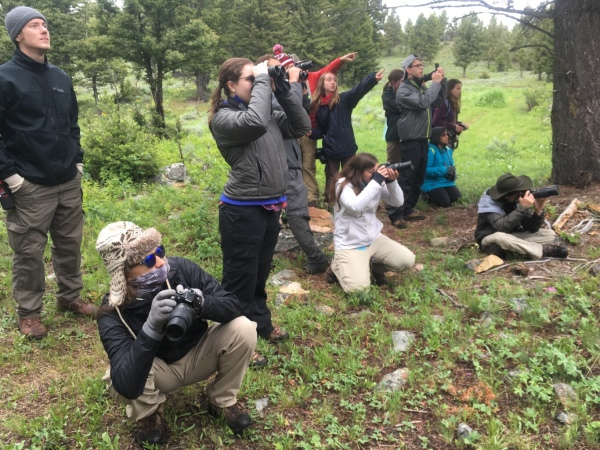The group watching for pika