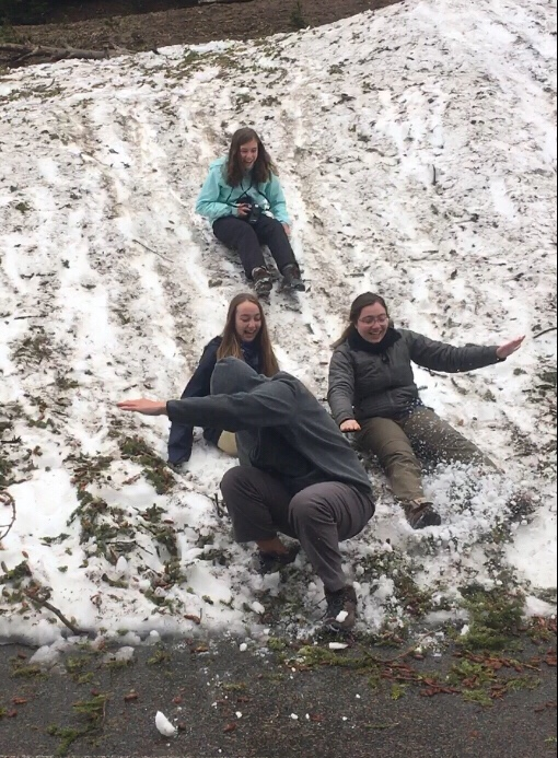 JCs sliding down a slope in the last snow on Mount Washburn
