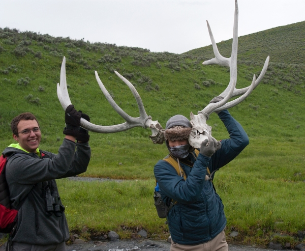 Noah and Robbie realize just how strong elk are to carry around such large antlers